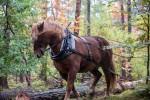Crowdfunding Startnext Kiezbett Herstellung Pferde