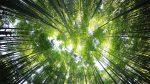 nachhaltig investerien grüne Crowdfunding-Plattformen